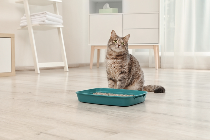 Bladder problems in cats - cat with litter tray