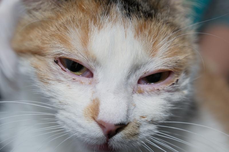 poorly cat
