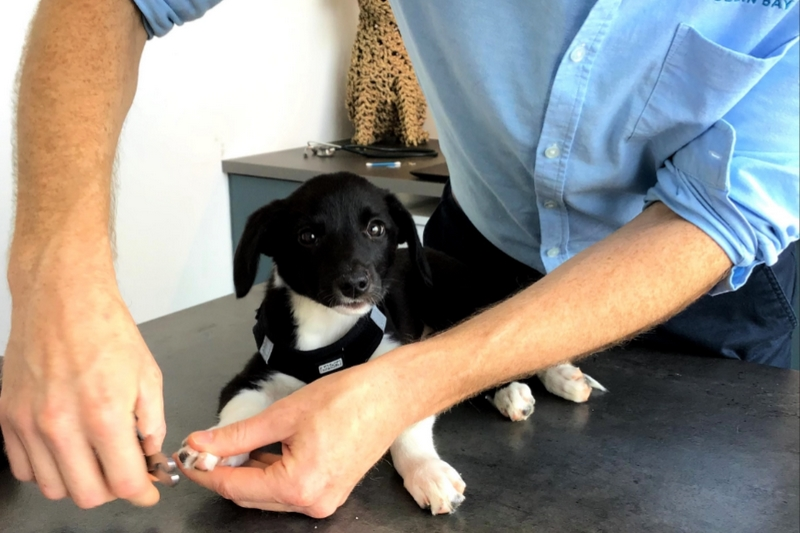 Colm clipping the nails of a very well behaved puppy