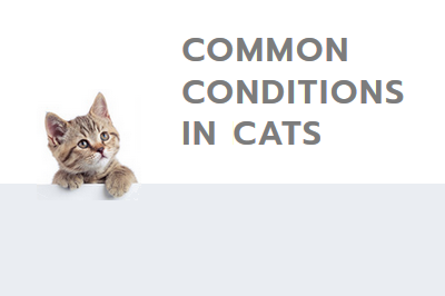 common conditions in cats