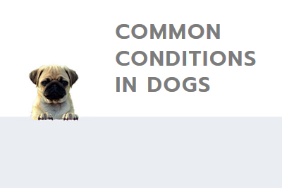 common conditions in dogs