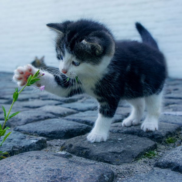 Dublin Bay Vets - playful kitten